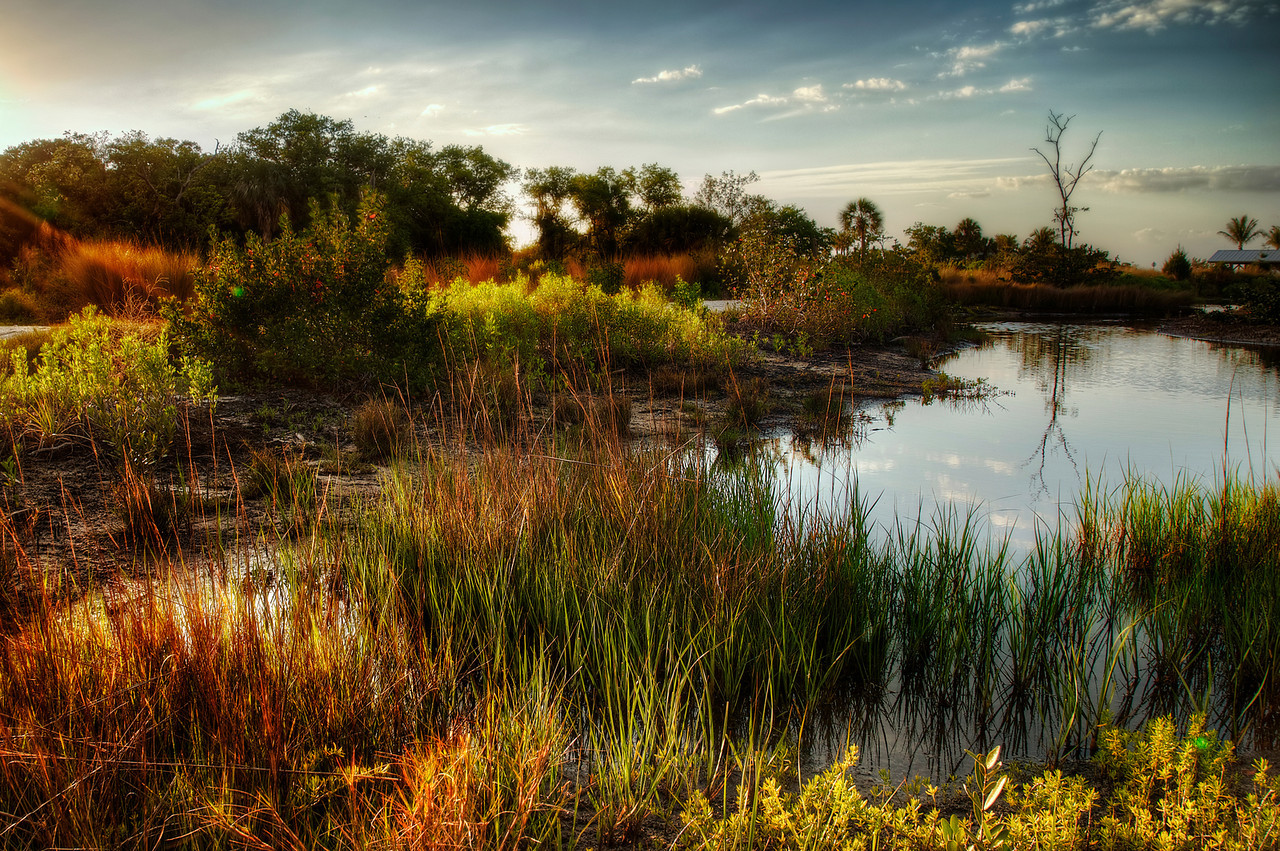 Neuer Naturschutzpark in Bradenton – Neal Preserve